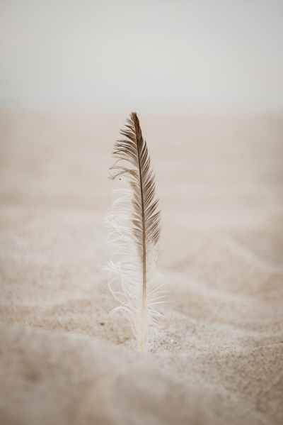 close up photo of brown feather on sand